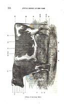 עמוד 116