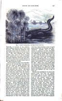 עמוד 447