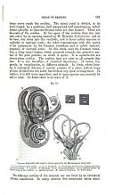 עמוד 181